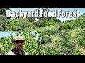 Late Spring Food Forest Tour (Year 7)!