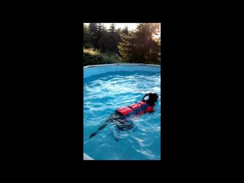 Boxer dog knows how to swim