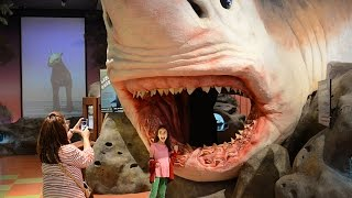 Download Florida Travel: Explore the Museum of Discovery and Science Video