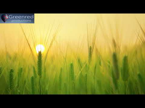 Lower Your Heart Rate with Relaxing Music, Deep Meditation Music for Relaxation, Stress Relief Music