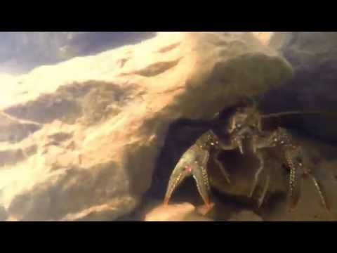 GoPro- Underwater Crawfish catching