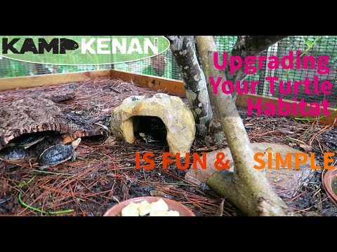 Simple Upgrade to the Chinese Box Turtle Habitat