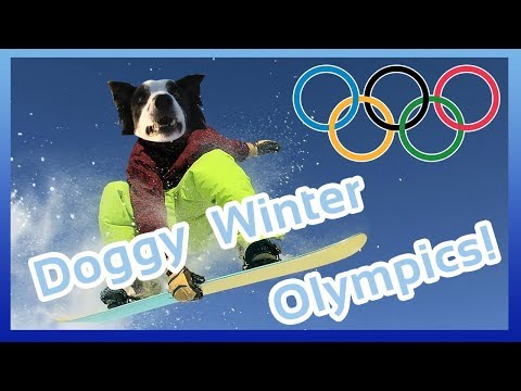 DOGGY WINTER OLYMPICS! Pyeongchang 2018 with Milo the Dog! Dog Sport Winter Olympics Assault Course!
