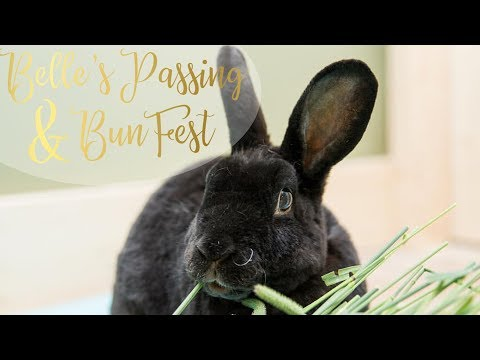 Belle's Passing and BunFest | Updates 😢