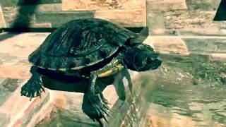 estanque para tortugas ao despues