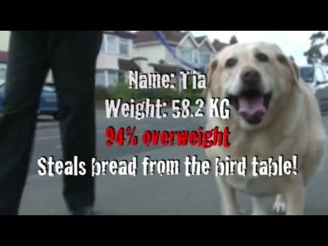 Pet Fit Club fat File - Tia the Dog
