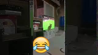 قطه تعشق كرة القدم