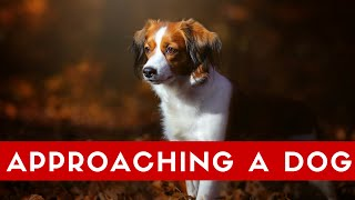 How To Approach A Dog Correctly! What To Do When Meeting Dogs.