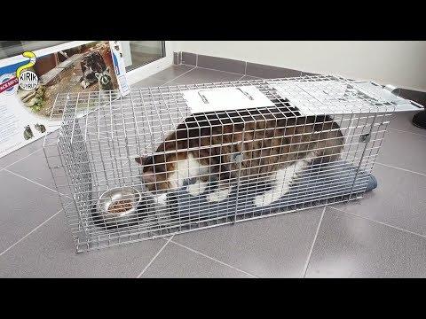 TNR - Setting up a Cat Trap - Havahart Model #1089