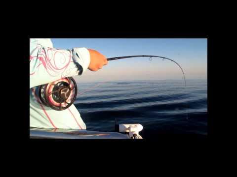 fly fishing tuna (Australia)
