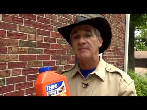 Kill Ants & Other Annoying Insects