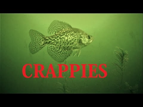 EARLY ICE FISHING Crappie, Bluegill & Pike!