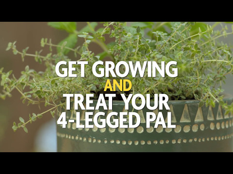 It's Time to Get Growing and Treat Your 4-Legged Pal