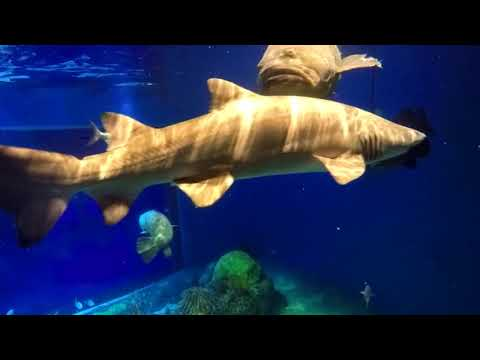 Shark Diving in Missouri