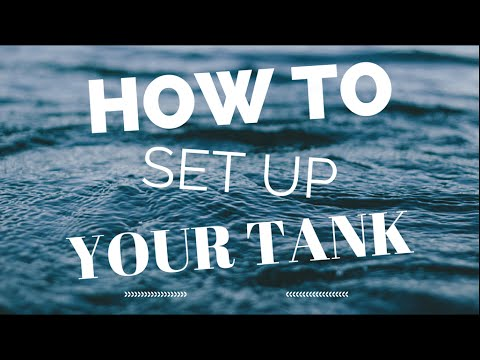 How To Set Up Your Tank