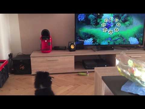 Dog like TV