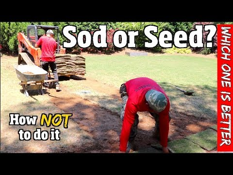 Seed Or Sod?  Which is better for your yard.  Pro-Tips