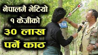 1KG को ३० लाख पर्ने काठको जंगलमै पुग्दा | Saptarangi Ojhelka Khabar, Resham Bohora