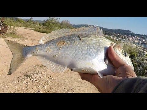 Fishing Porgy in Greece...  ψάρεμα τσιπούρας