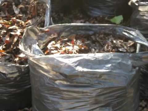 Leaf mould with benefits