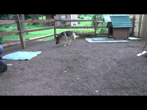 Dog Potty Area by Bobs Pet Stop