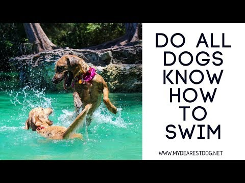 Do all Dogs Know How to Swim: Dog Swimming Classes