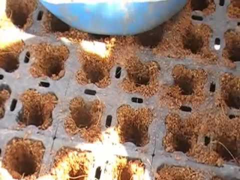 Base/ Ekot Controlled Release Fertilizer (CRF) application