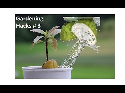Use Coconut Water on Your Plants And This Will Happen - Gardening Hacks#3