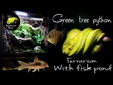 My Green Tree Python Terrarium With Tropical Fish Pond