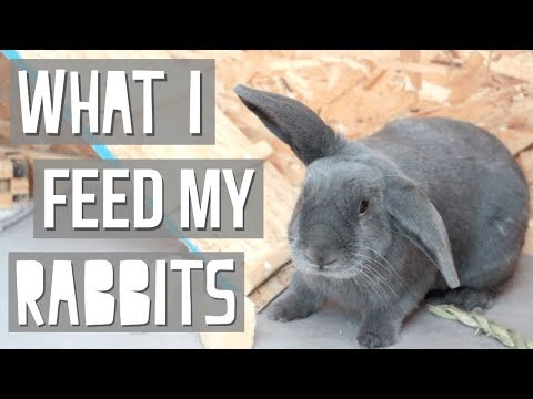 What I Feed My Rabbits