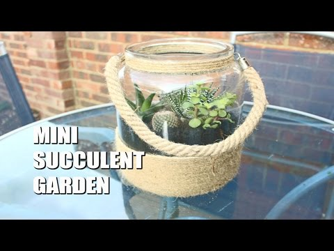 DIY| Mini Succulent Garden