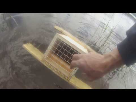 How to Make Floating Mink Boxes