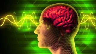 Rewire & Evolve Your Brain - Dr. Joe Dispenza