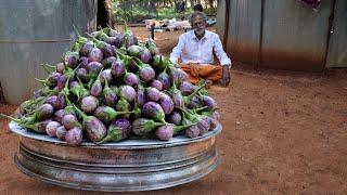 VEG!!! BRINJAL Recipe Prepared by my Daddy Arumugam / Village Food Factory