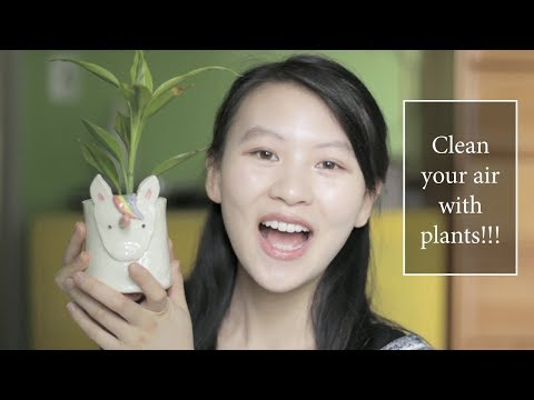 Clean The Air With PLANTS | Remove mold spores, formaldehyde + more