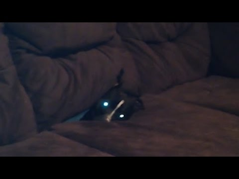Dog Goes Couch Diving
