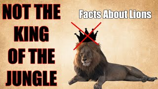 11 Amazing Facts About Lions