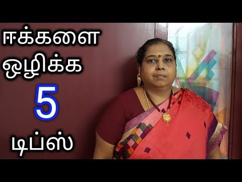 5 Tips to get Rid of House flies In Tamil