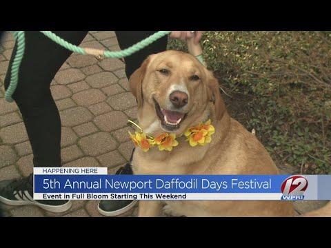 Spring returns with Newport Daffodil Days Festival