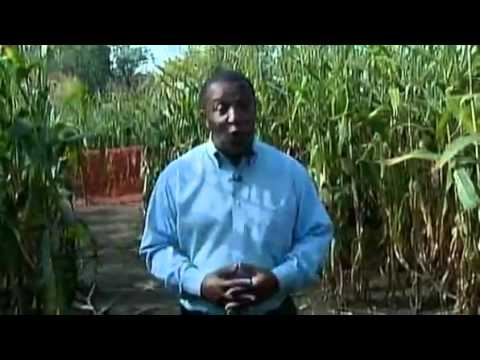 family lost in corn maze calls 911