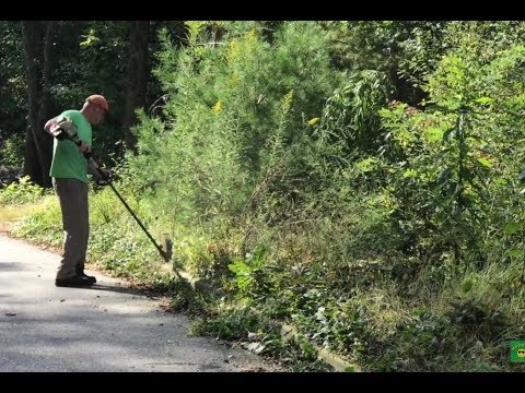 The most overgrown yard and landscape clean-up of the 2017 season!