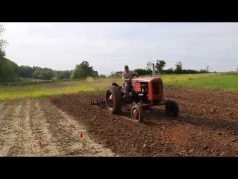 1954 Case VAC Tractor with Spring Tooth Harrow