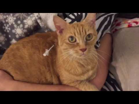 Giving insulin To my diabetic cat