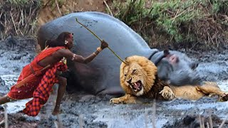 OMG!!! Terrible Power Wide-Mouthed Hippo Destroy Strongest Lion To Save Mother, Lioness vs Hyenas