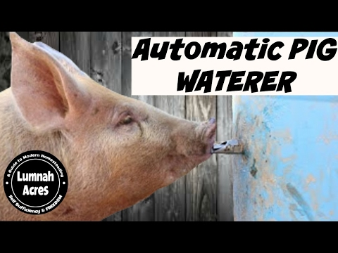 Automatic Pig waterer