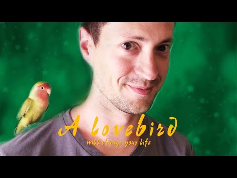 A lovebird will change your life