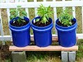 GroBucket Self Watering Planter Review And Grow