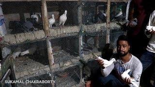 TIMIR NUNISH PIGEON LOFT VISIT (KALYANPUR)
