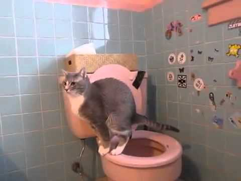 2014's Trained Cat to Poop in Toilet & wash self. Subscribe ME.