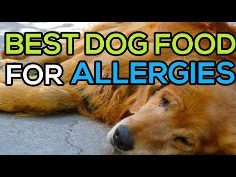 Best dog food for skin allergies. Top 5 best dog food for allergies to reduce allergic reactions
